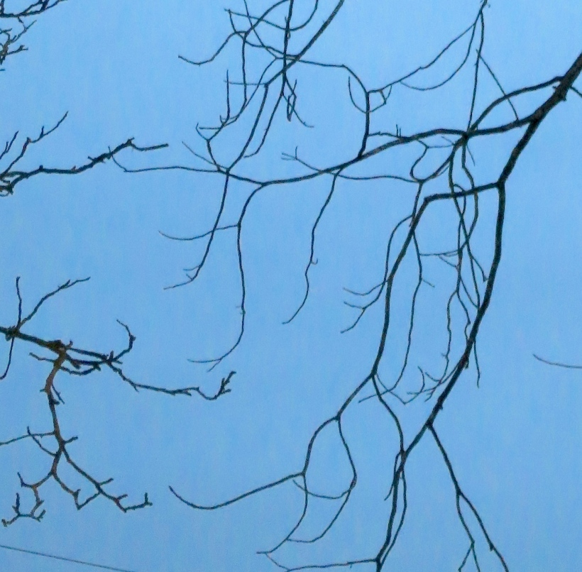 branches8