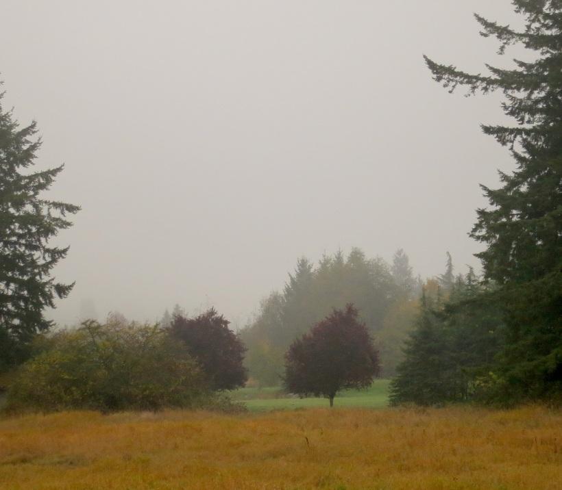 fog1021