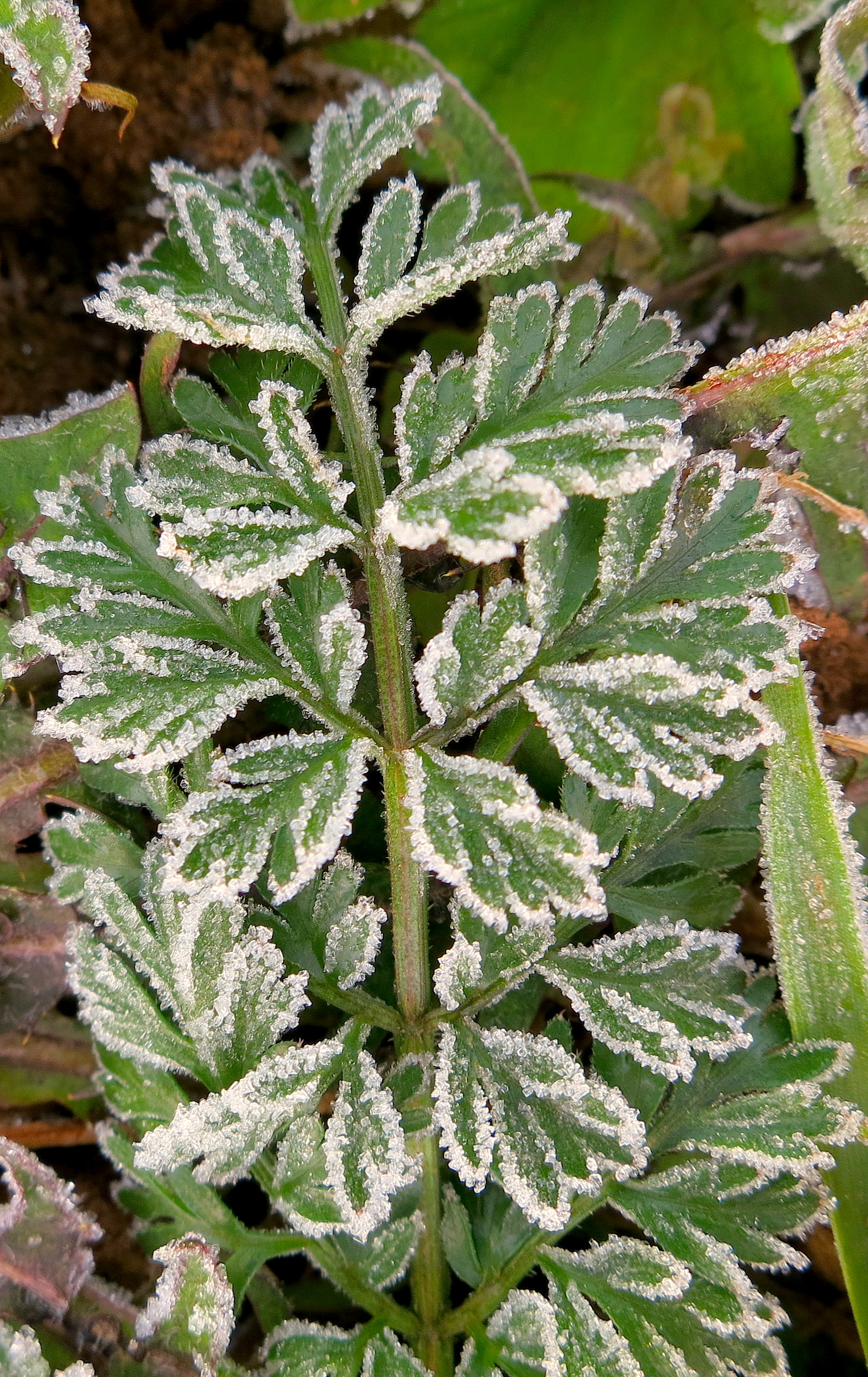 frost112313