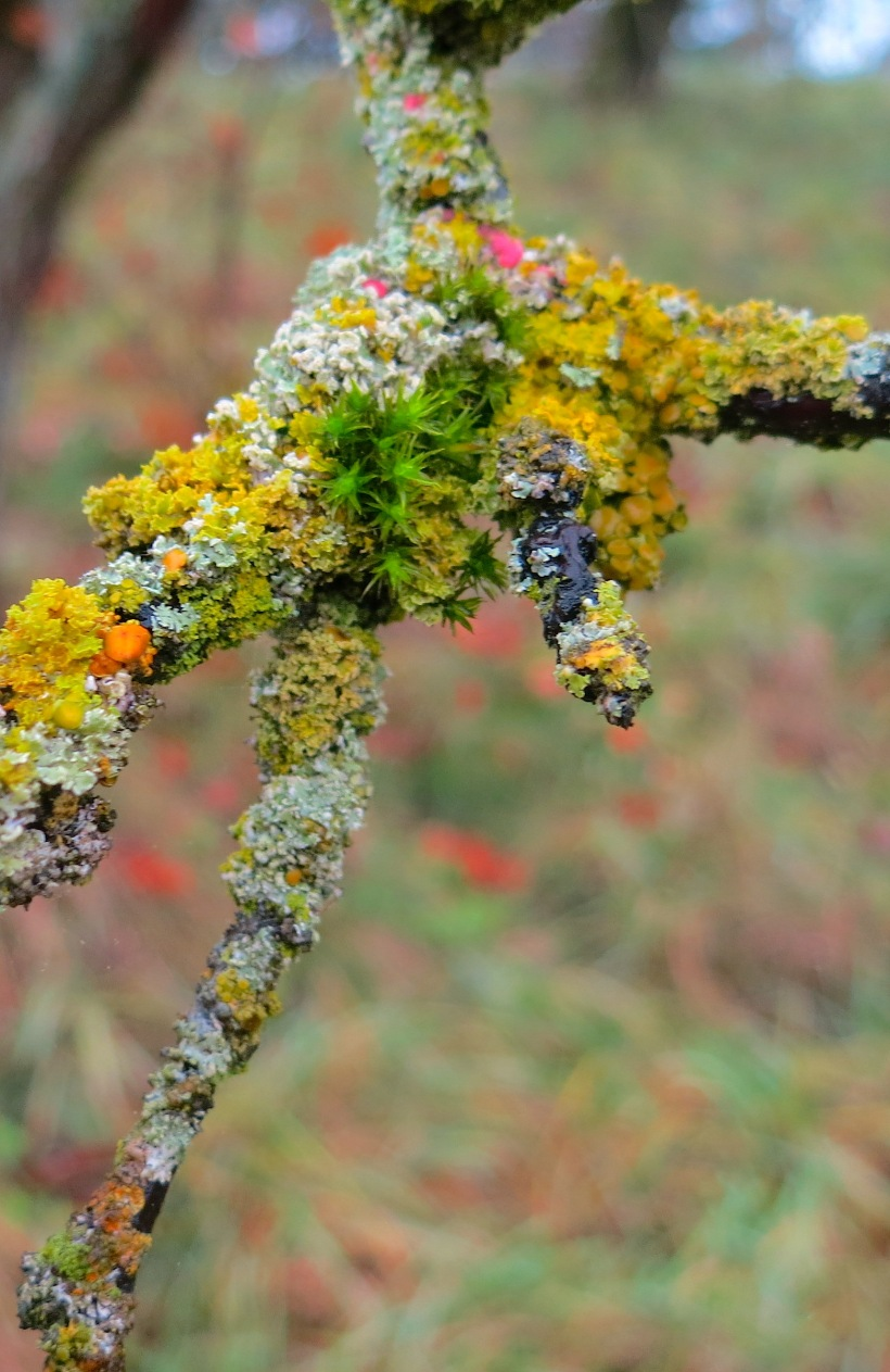 lichen18