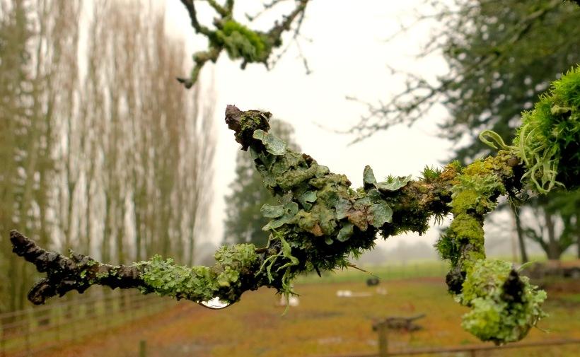 lichen25