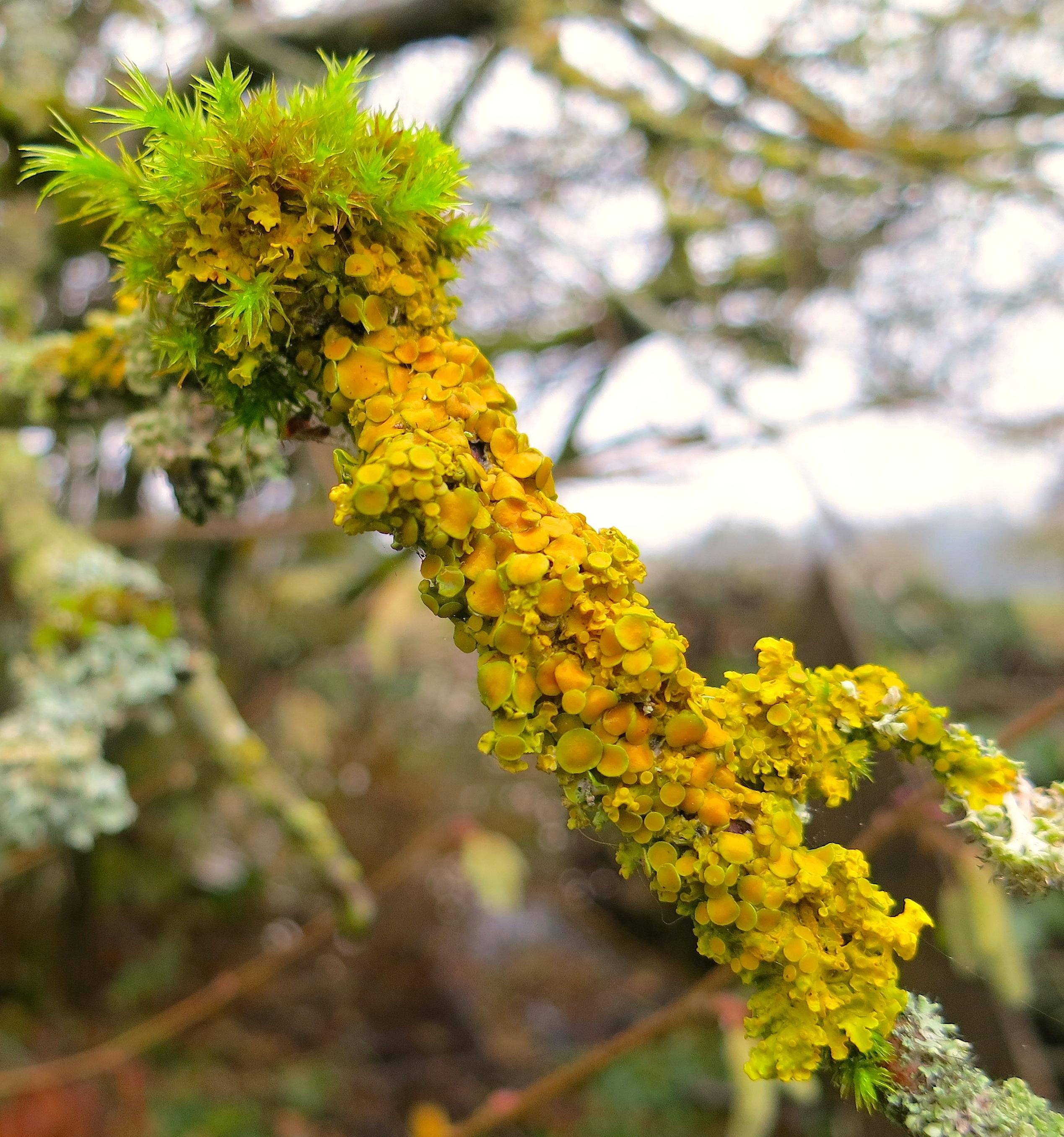 lichen26