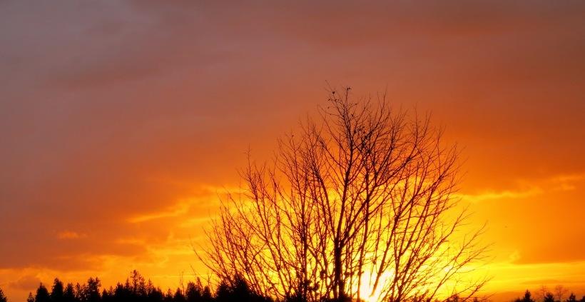 sunset11161