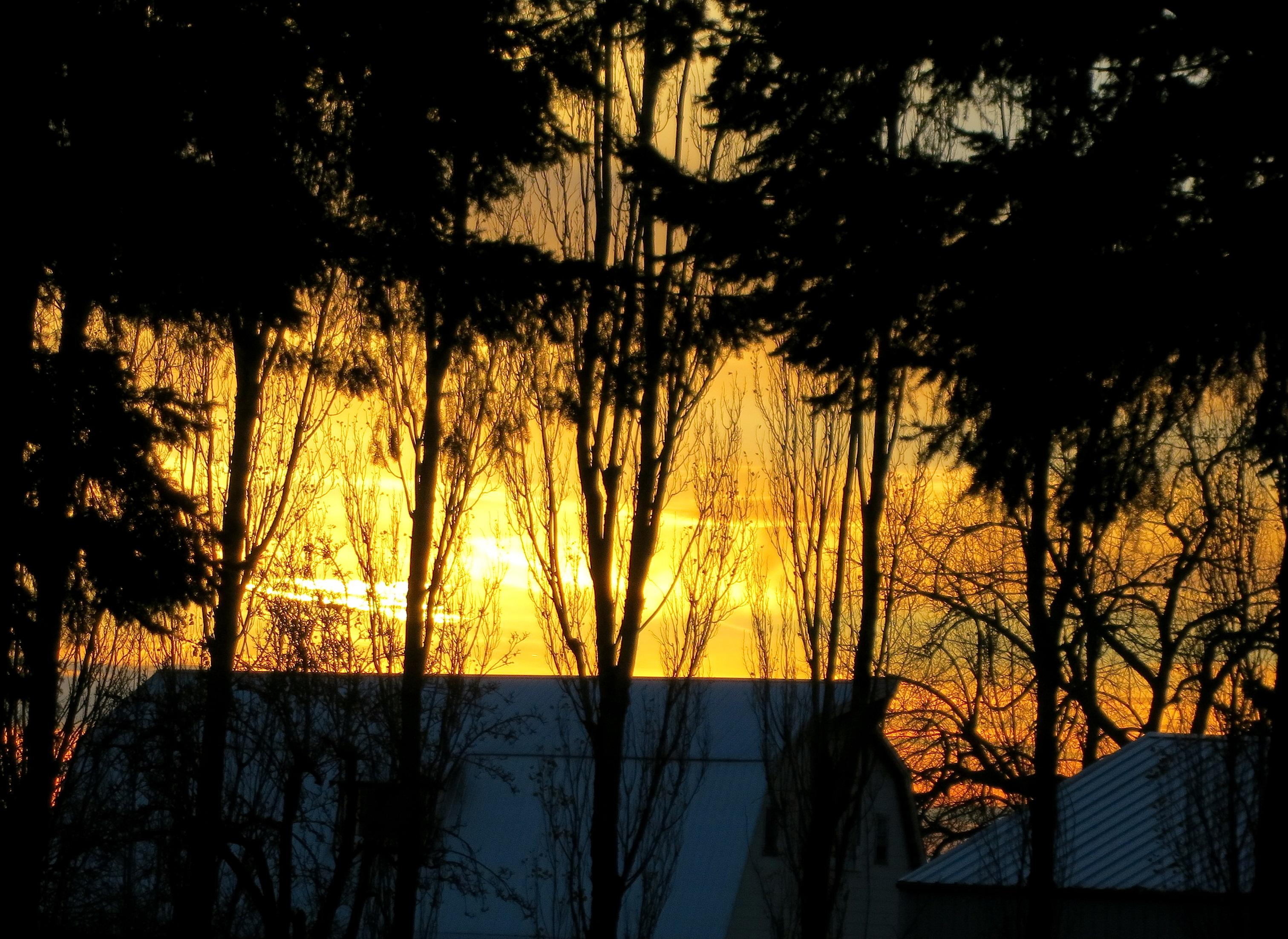 sunset11241