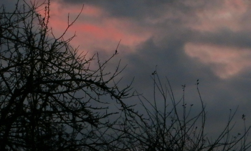 sunset11287