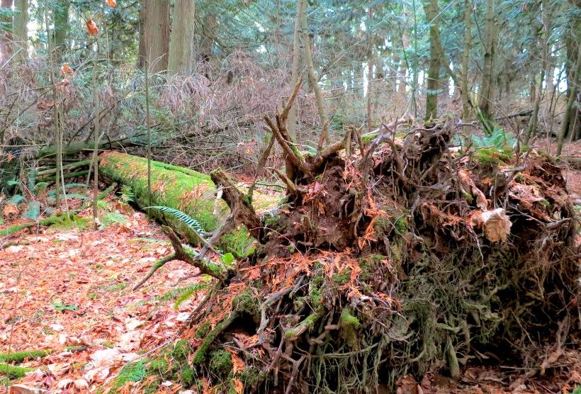 woods27