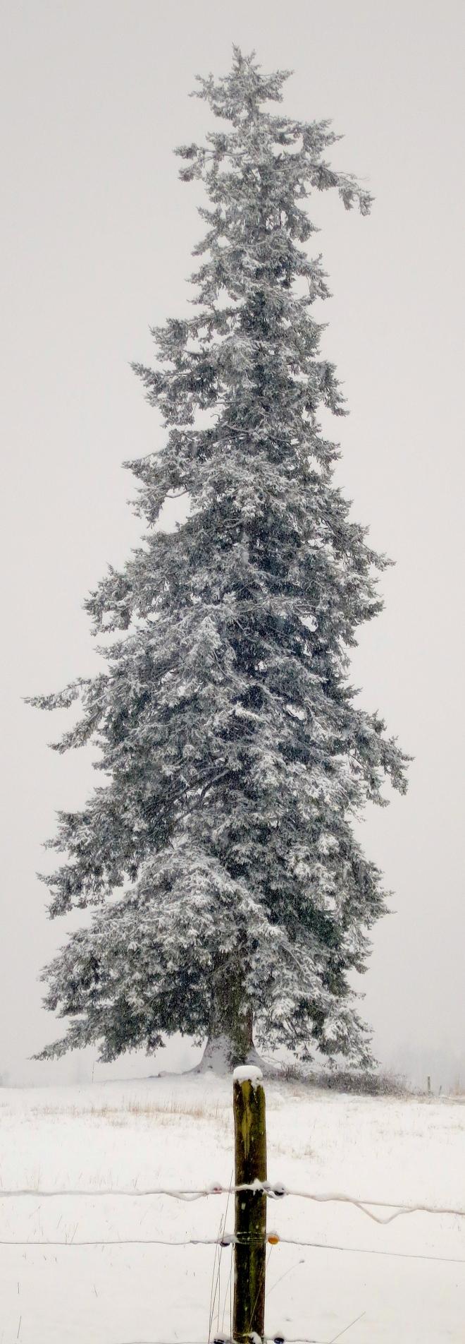 snow12201324