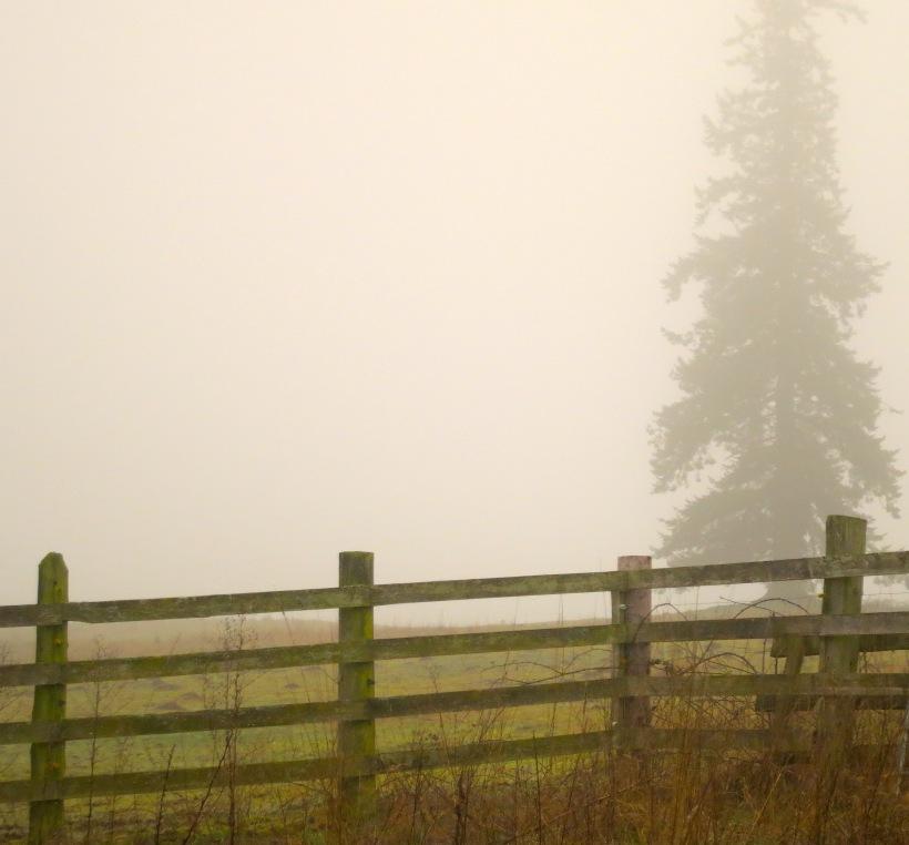 fog118