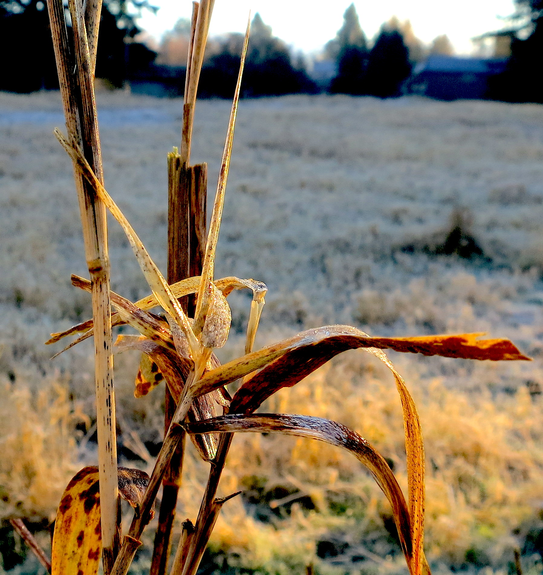 frost125144