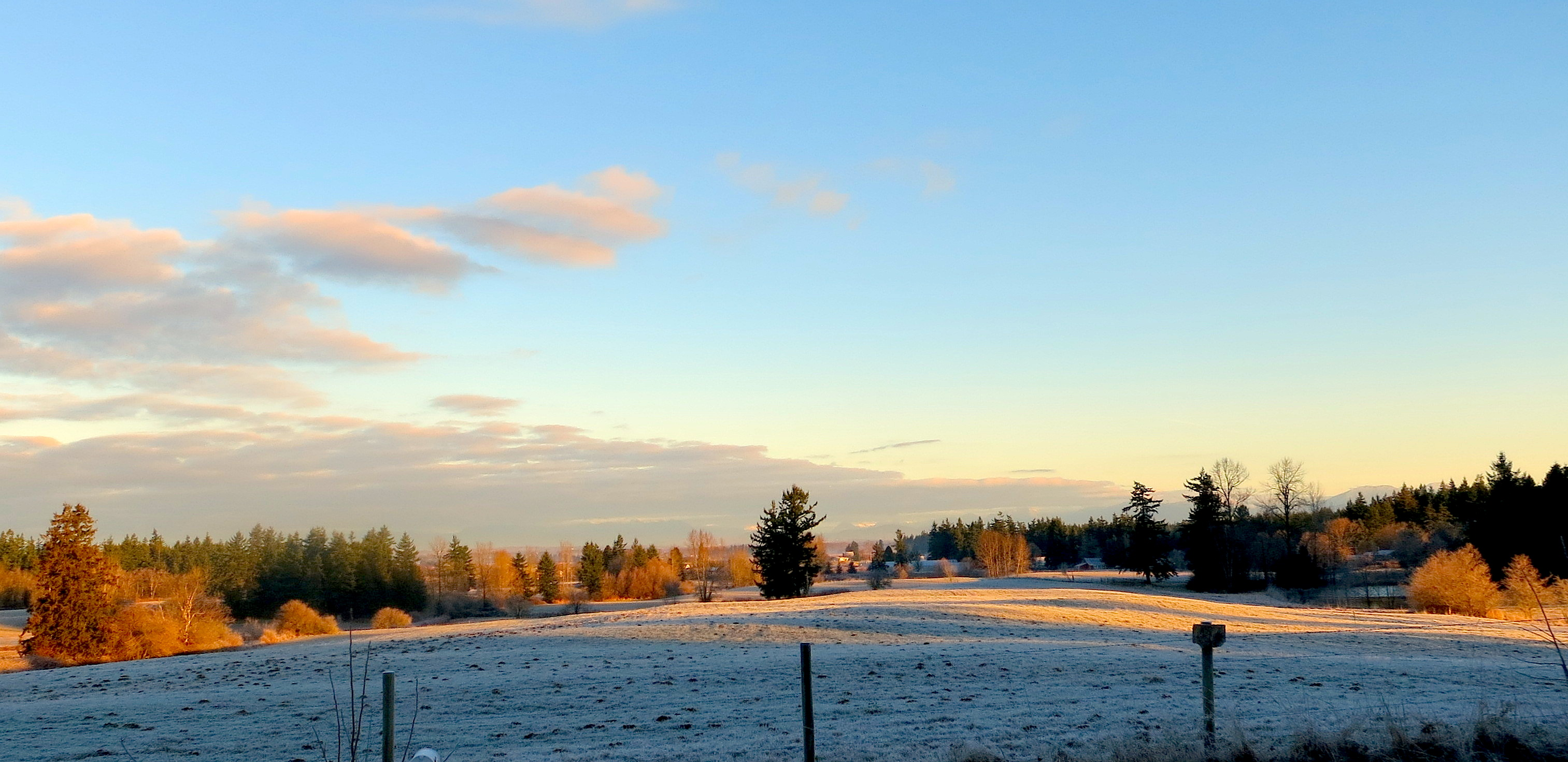 frost1419