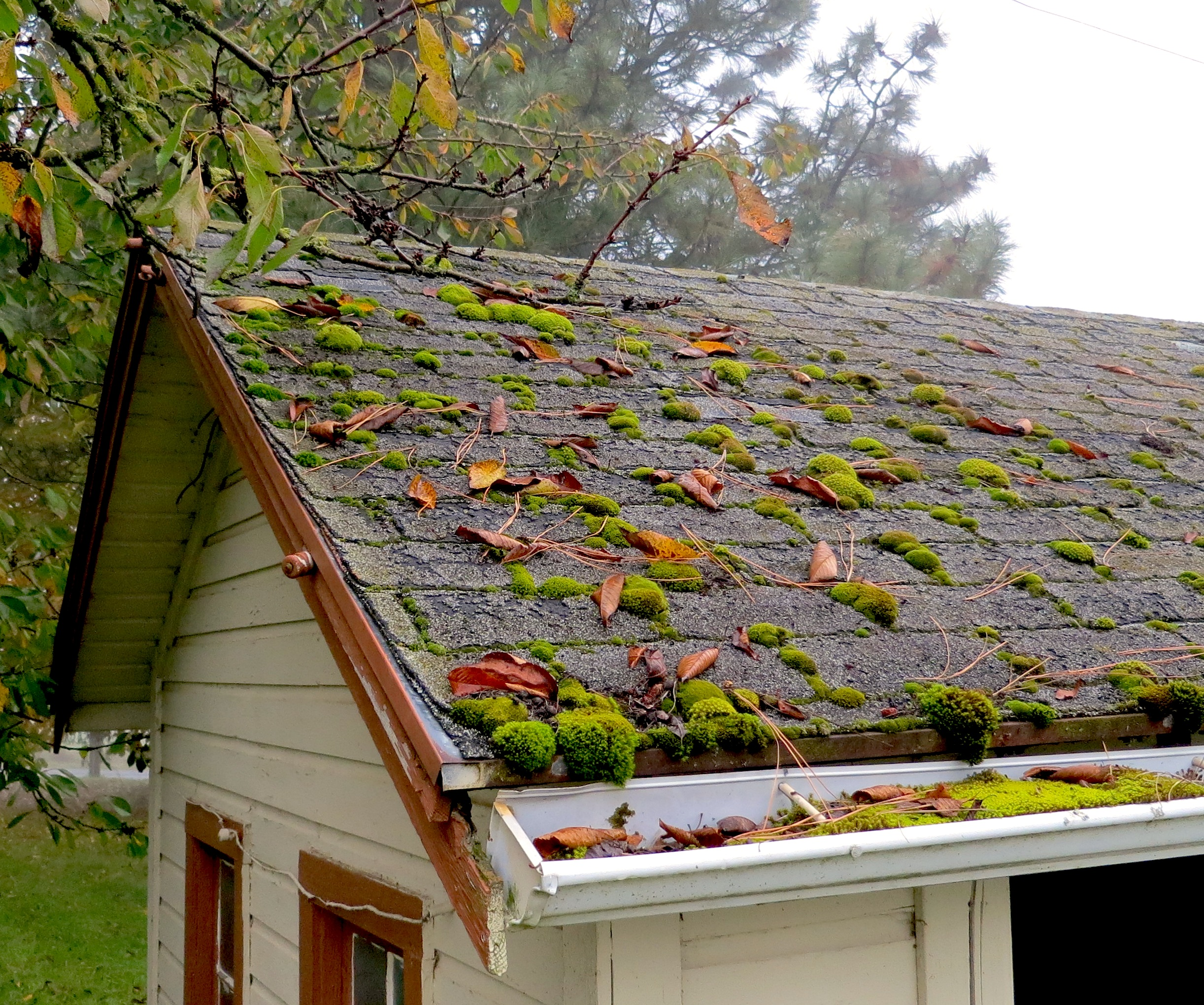 roofmoss