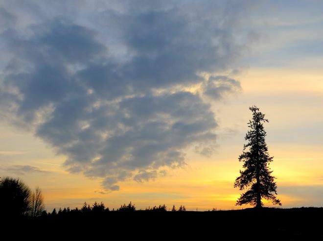 sunset1181