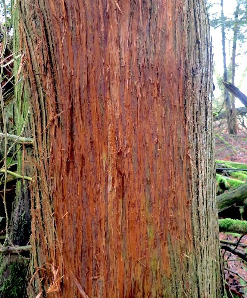 deerrubbingtree