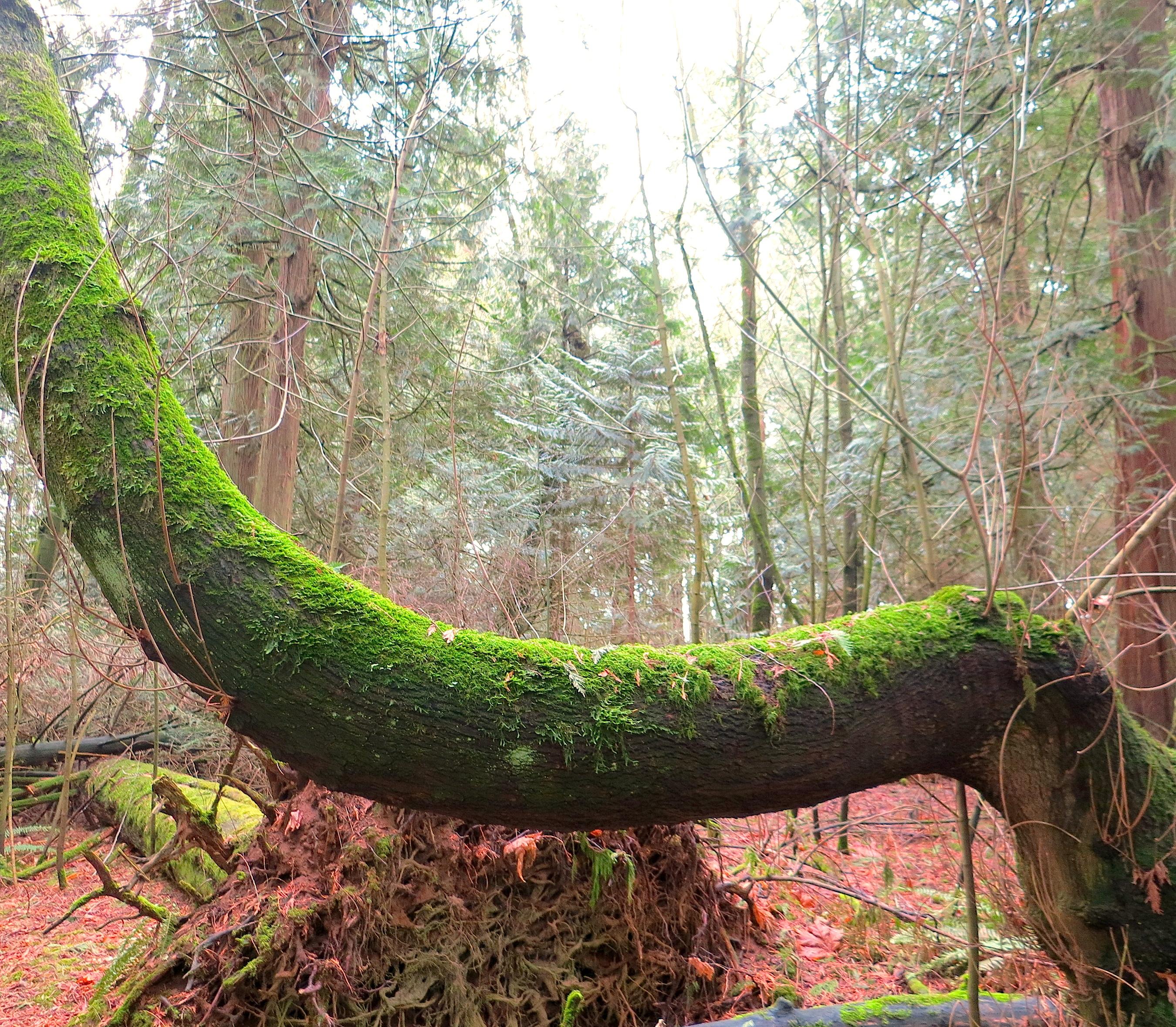 febwoods