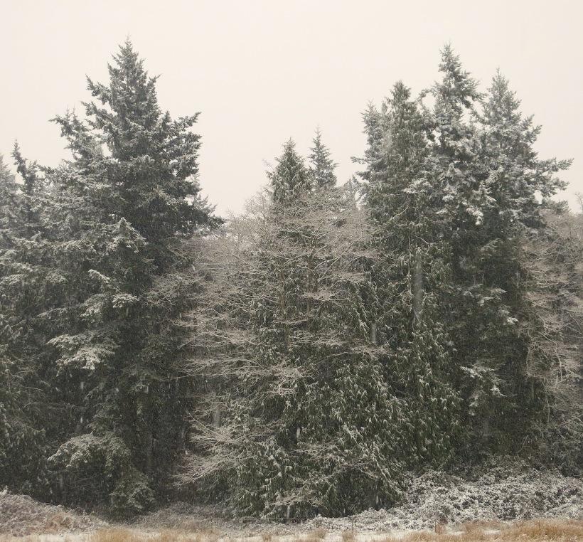 snow12201313