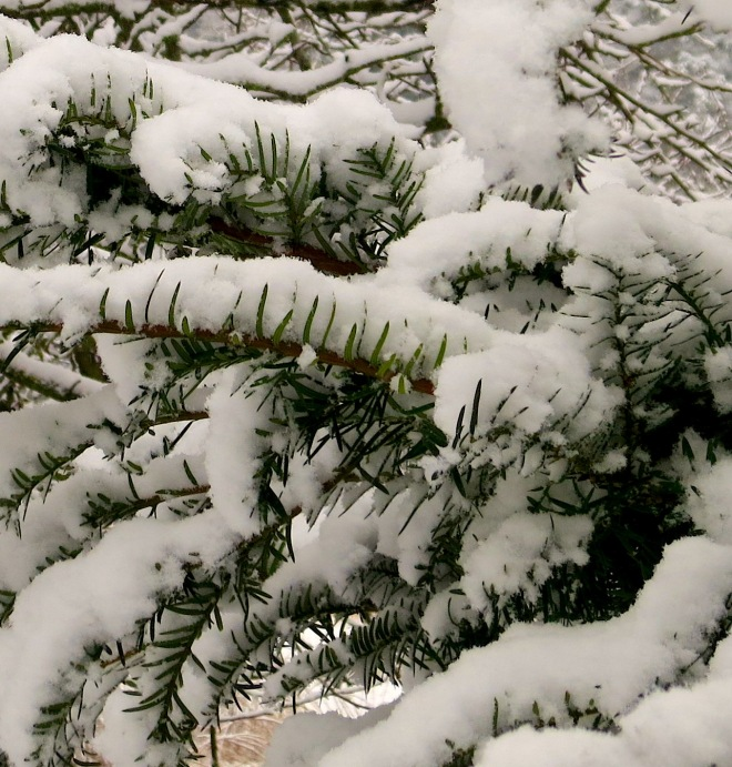 snow12201331