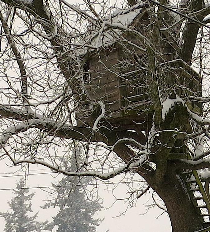 snow12201332