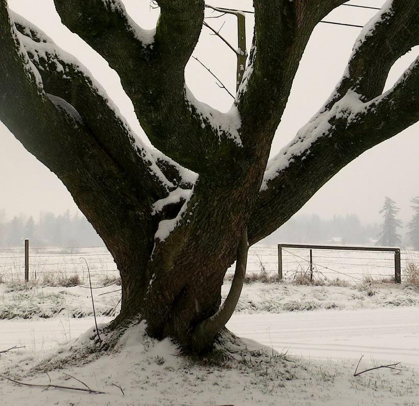 snow12201336