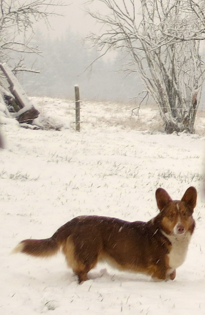 snow1220137