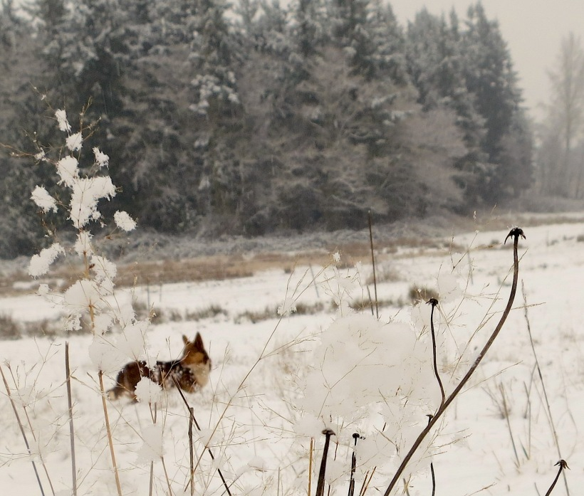 snow1220138