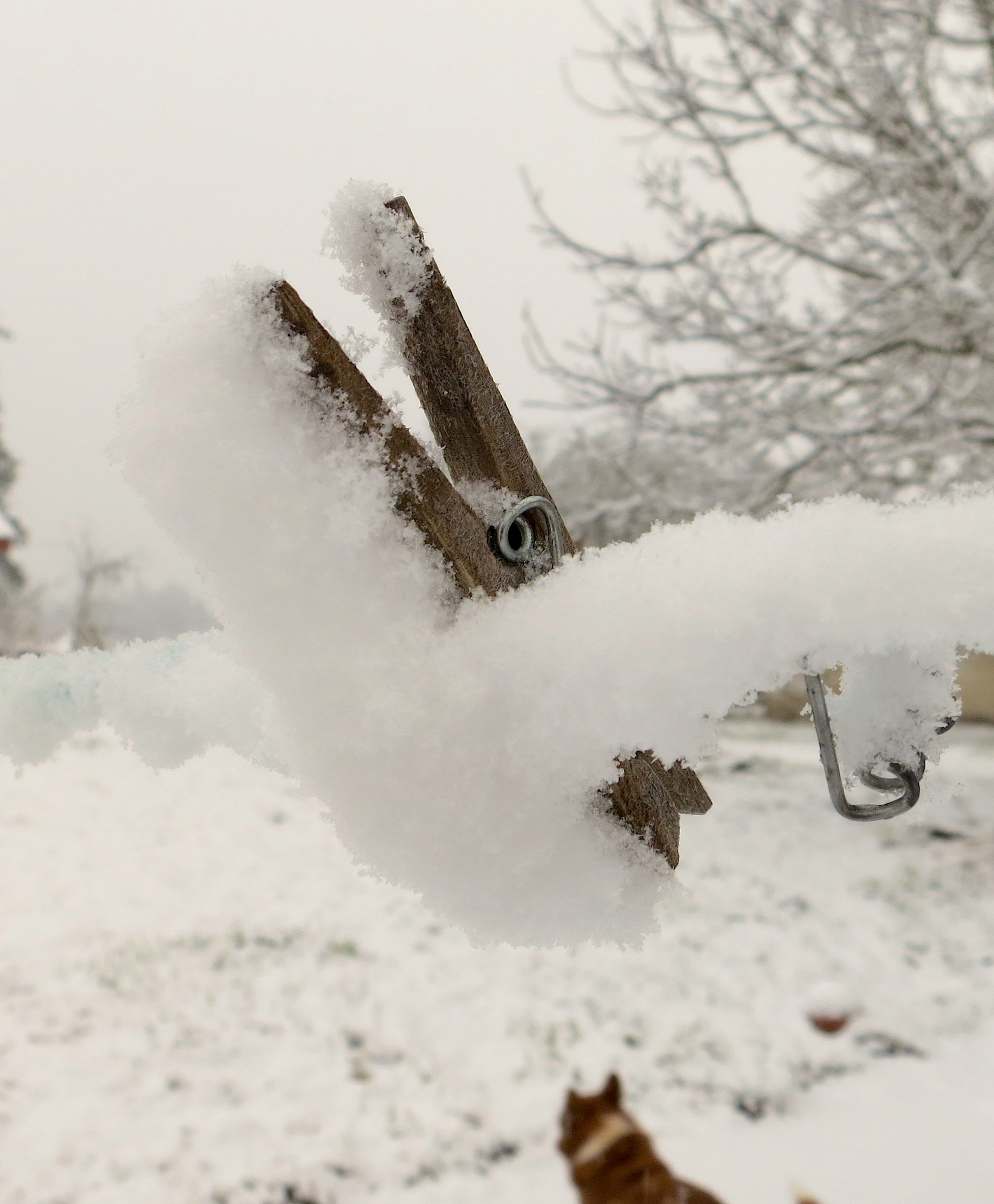 snow22214