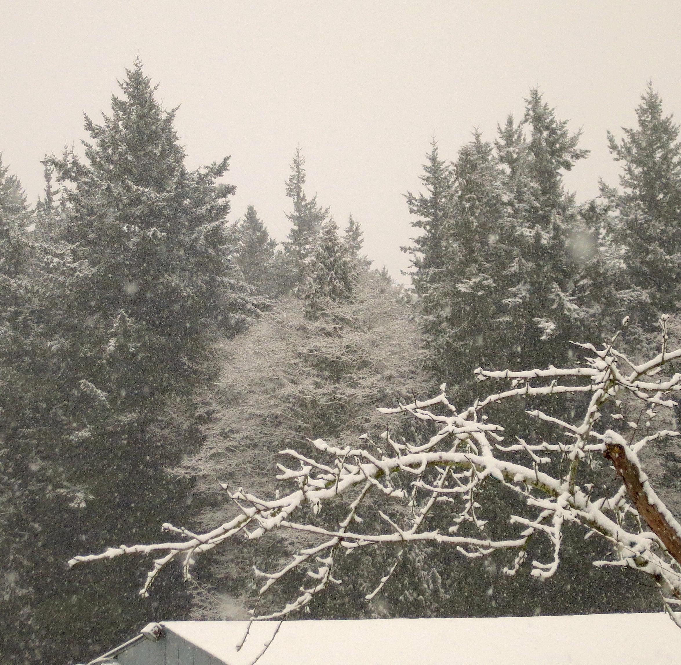 snow2221410