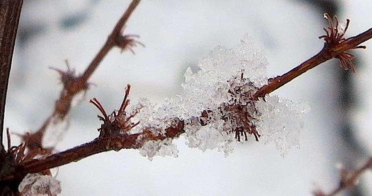 snow2221417