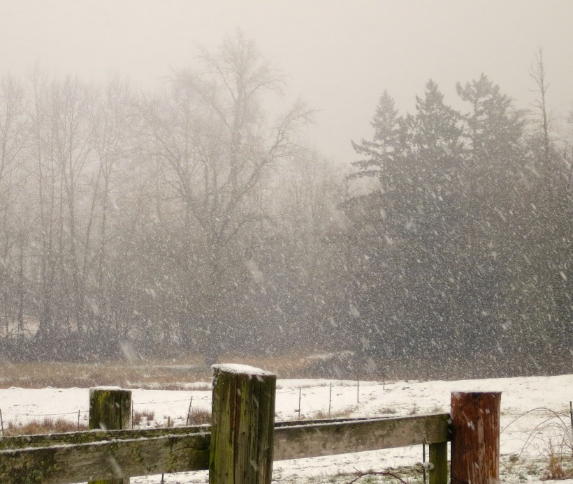 snow2221419