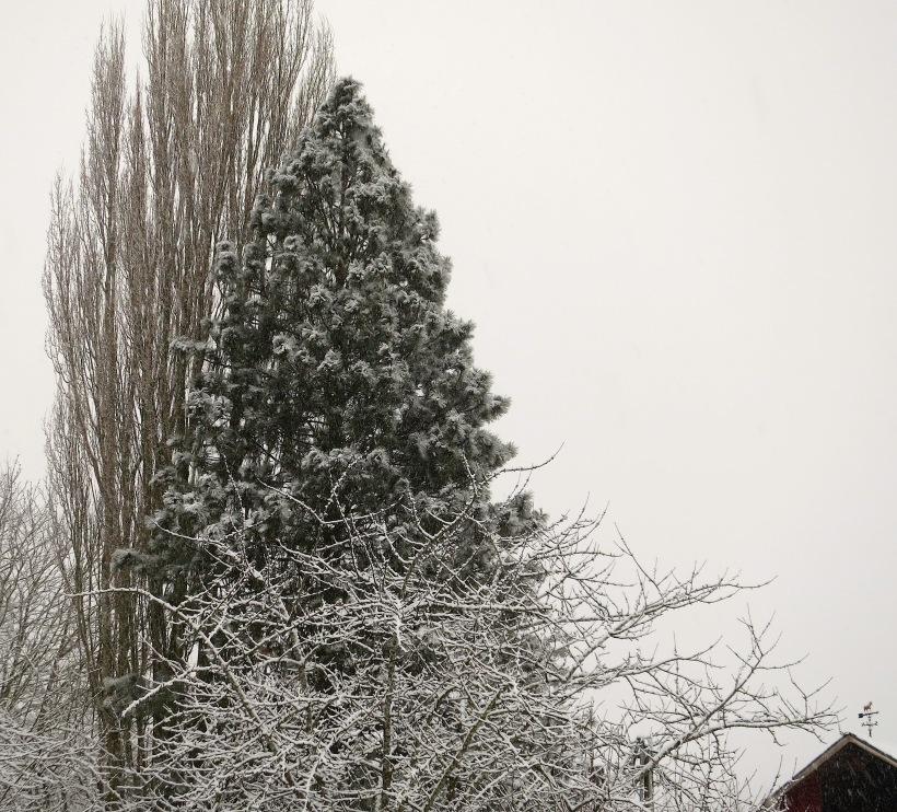 snow222142