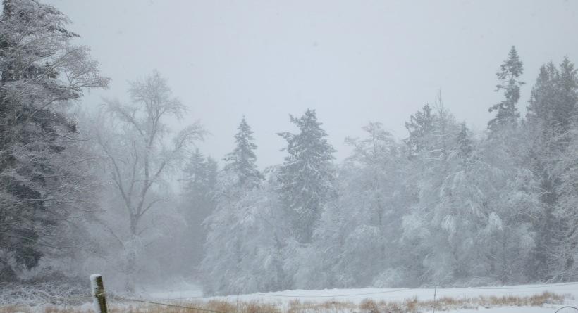 snow22314