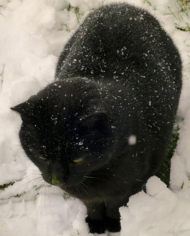 snowjose