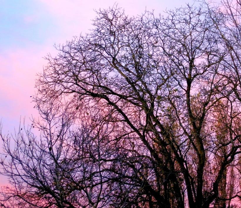 sunrise11114