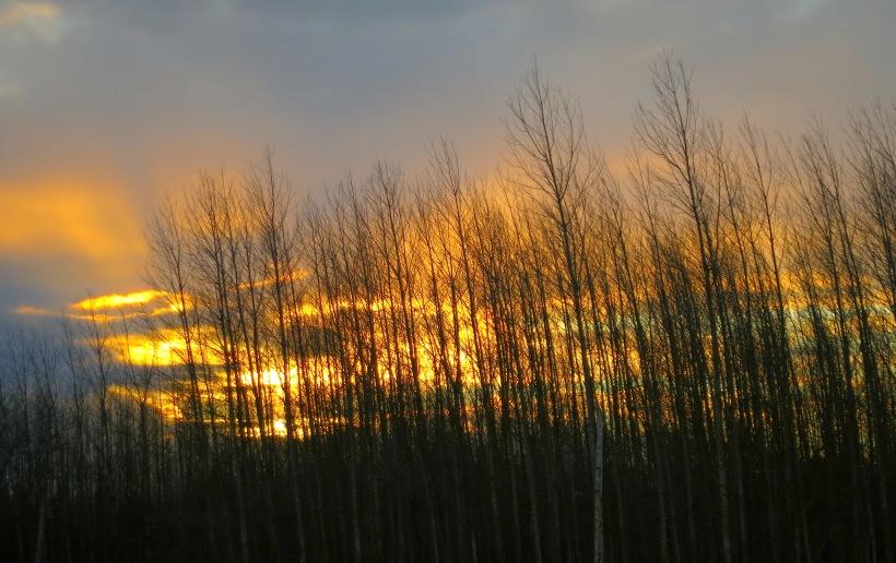 sunset24141