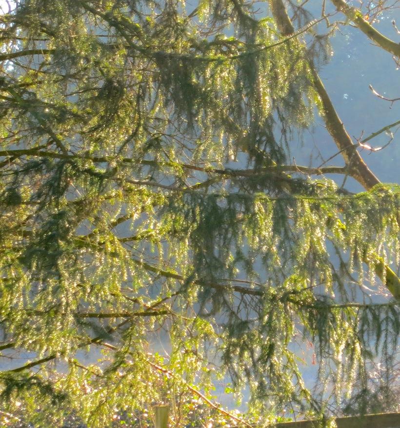 treewithlights