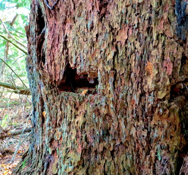 woods14