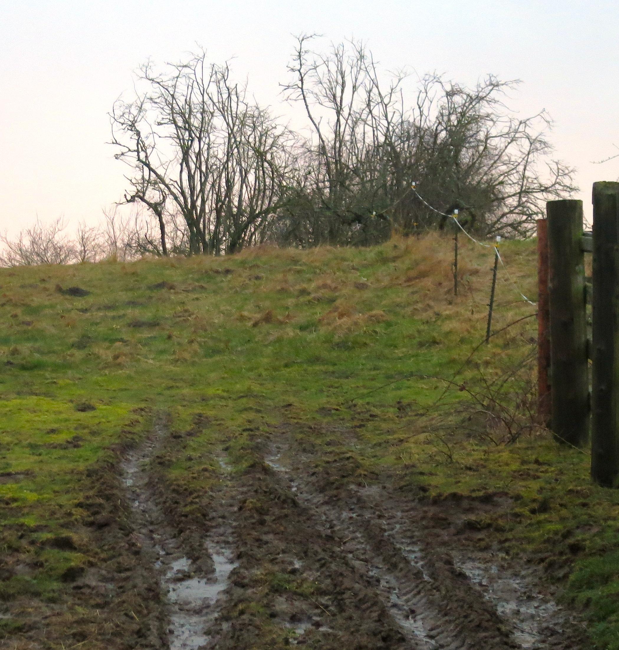 mud3614