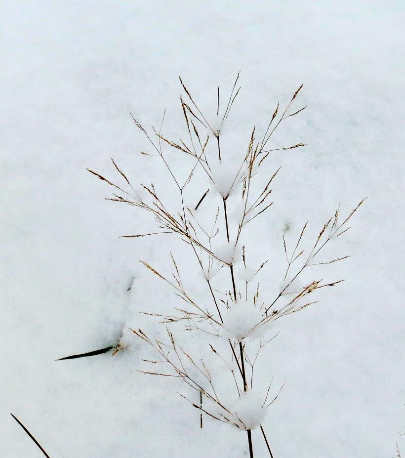 snow12201337