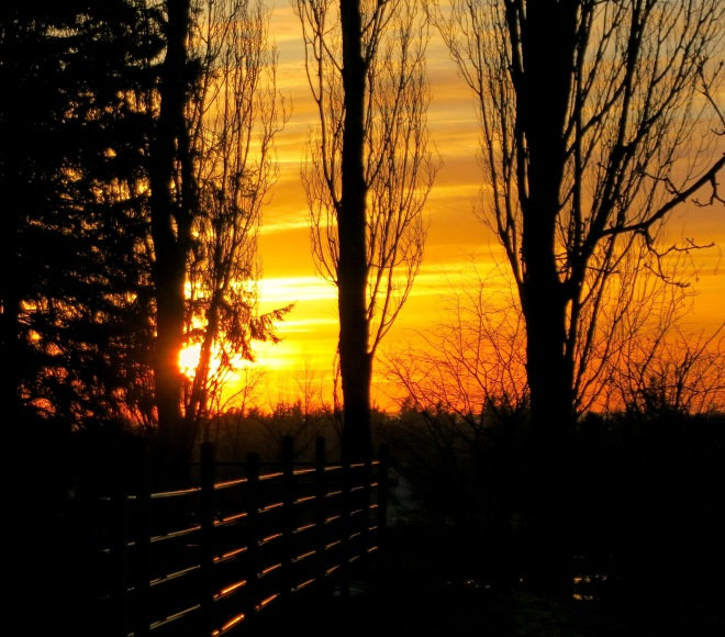 sunset31114
