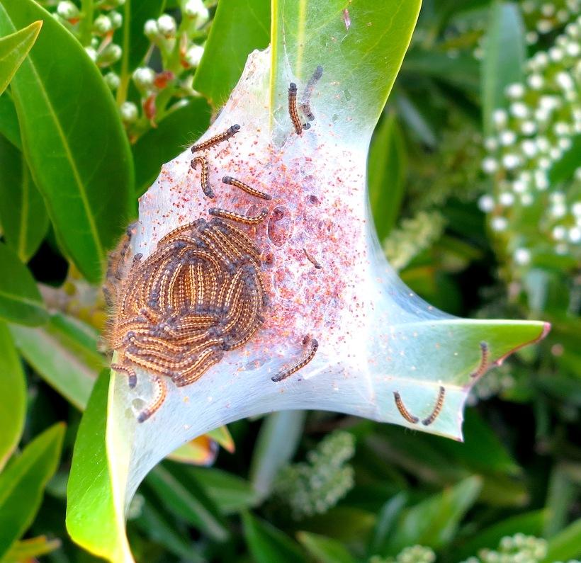 caterpillarweb