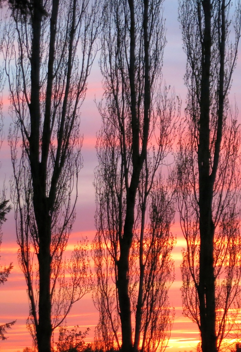 sunset41414