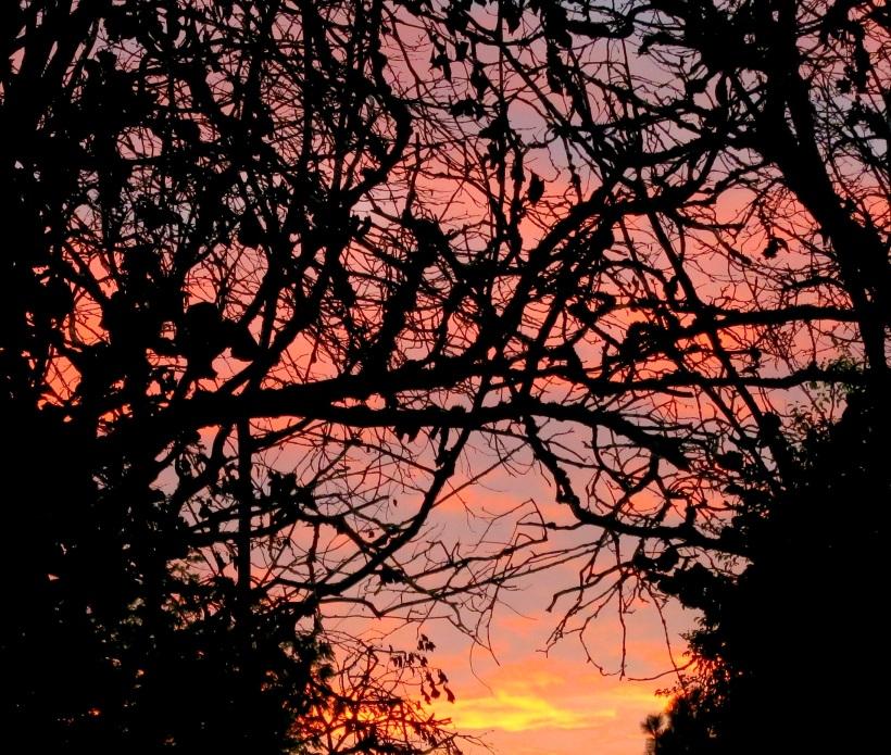 sunset9165