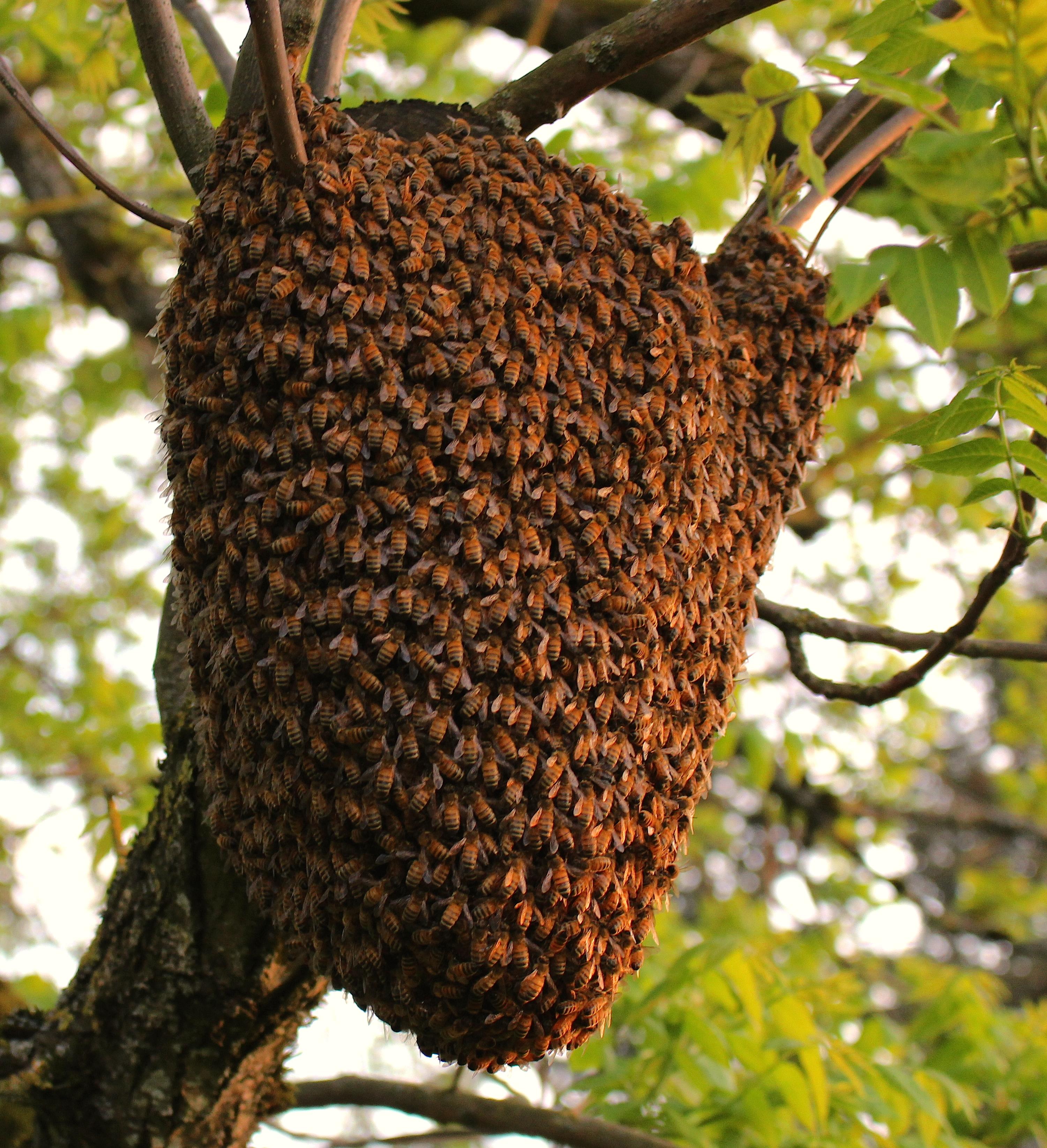 beeswarm51410