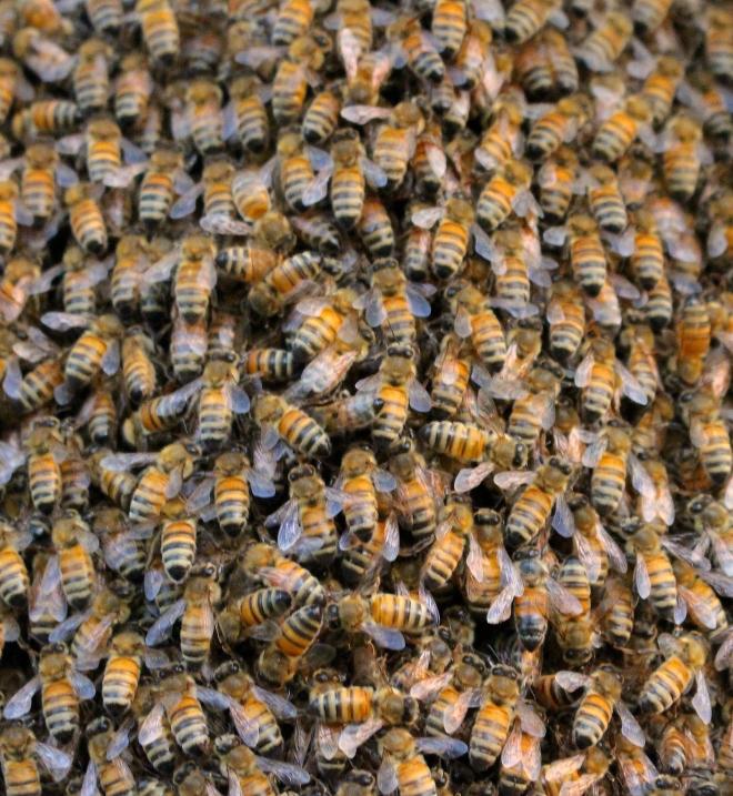 beeswarm51411