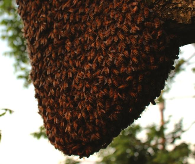 beeswarm5143