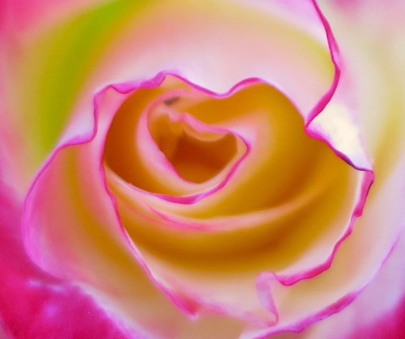 rosycenter