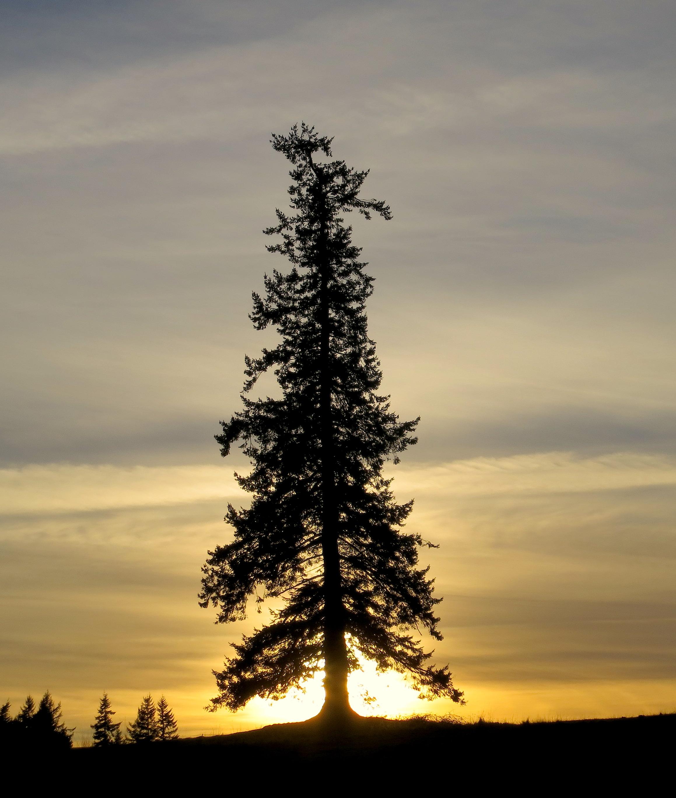 sunset15132