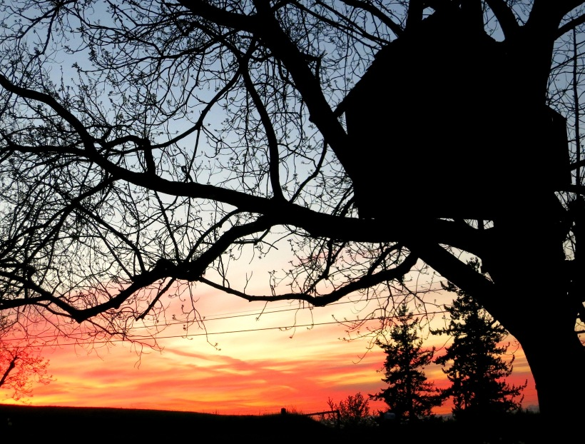 sunset4301
