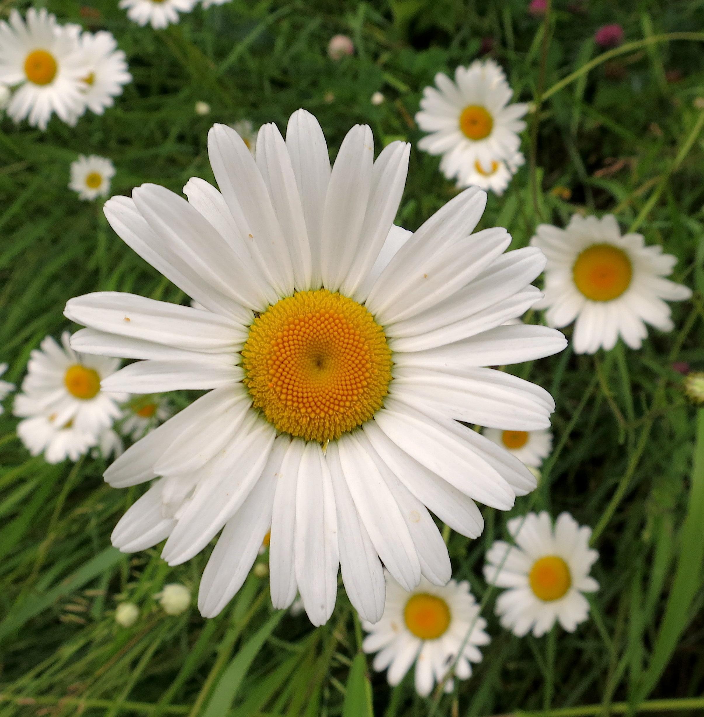 daisy20141