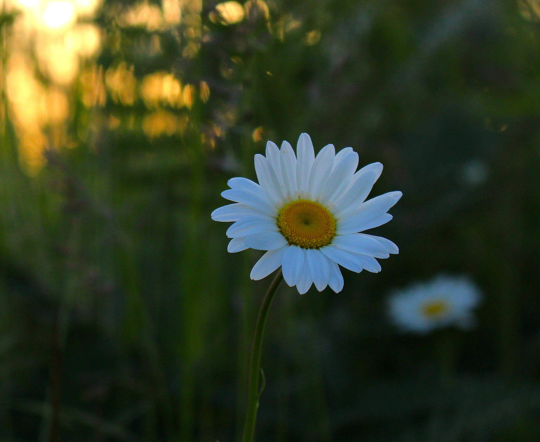 daisydawn7