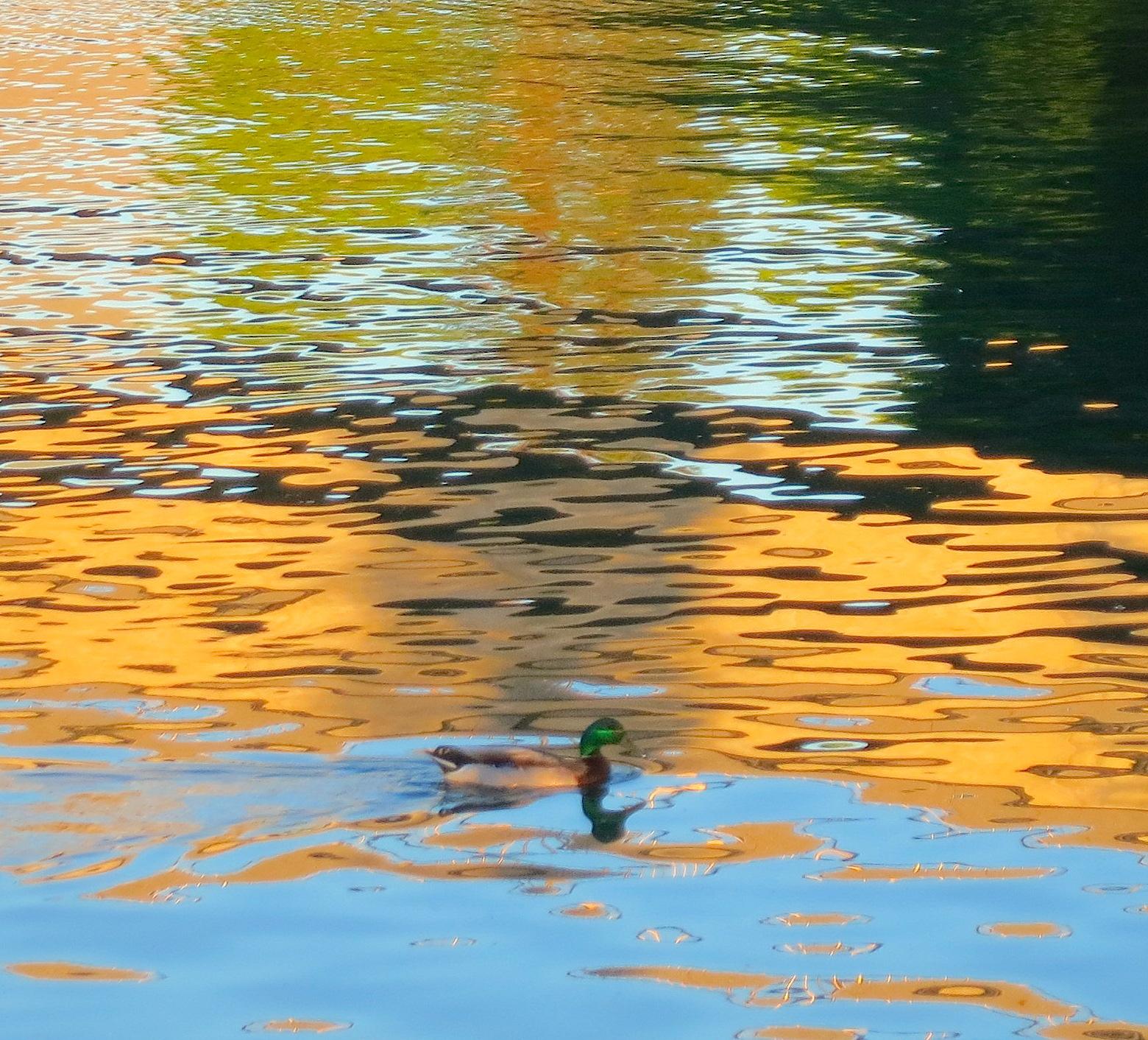 duckchelan2